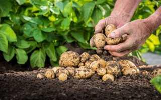 «Табу ТРІО» — безпечна передпосівна профілактика хвороб і шкідників картоплі
