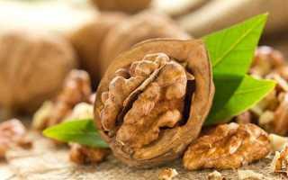 Перегородки волоських горіхів — лікувальні властивості і протипоказання до застосування, лікування вузлів щитоподібної залози, настоянка на горілці, відео
