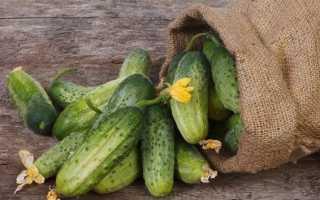 Вирощування огірків. Як і коли садити огірки? Догляд за огірками