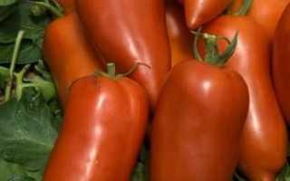 Томат Корнабель F1: характеристика і опис сорту, особливості вирощування