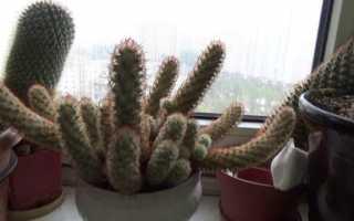 Як і чим краще удобрювати кактуси і сукуленти