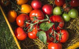 Кращі сорти томатів сибірської селекції з фото для теплиць і відкритого грунту на 2019 рік Відгуки
