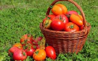 Як вносити фосфорно-калійні добрива для томатів