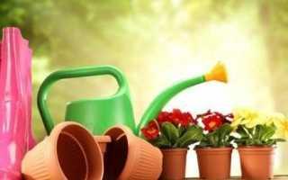 Добрива для квітів. Види і особливості добрив для квітів