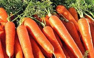 Як сіяти моркву, щоб не проріджувати? Поради + відео