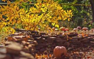Жовтень на грядках — збір пізнього врожаю капусти, картоплі, заготівля насіння, посадка часнику, відео