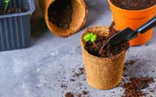 13 кімнатних рослин, які легко виростити з насіння в домашніх умовах. фото