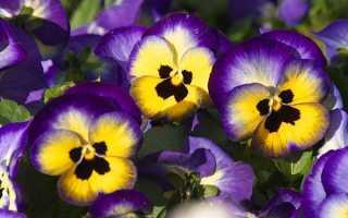 Багаторічні квіти для клумби — вибір видів і сортів для посадки, відео