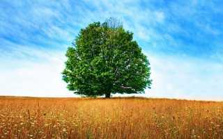 Тривалість життя дерев, скільки живуть, таблиця, відео