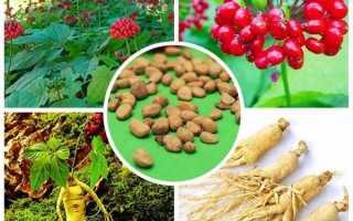 Вирощування женьшеню з насіння, вибір матеріалу, догляд, відео