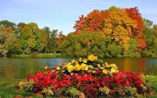 Жовтень на клумбі — підготовка цибулинних і кореневищних рослин до зими, відео