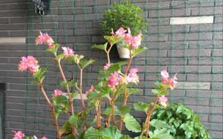 Сітка для витких рослин з Китаю — характеристики, правила використання. ціна, відео