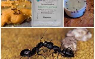 Отрута для мурах з борної кислоти, дія, рецепти, відео
