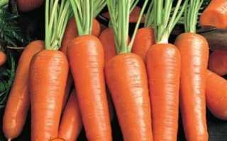 Посадка моркви під зиму: як і коли садити моркву під зиму
