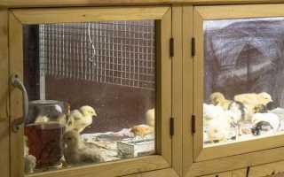 Брудер для курчат — виготовлення своїми руками за розробленими кресленнями, температура в клітці, відео