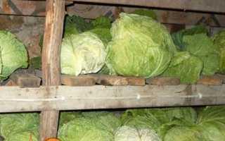 Як зберігати свіжу капусту в погребі, в підвалі взимку