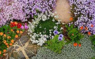 Грунтопокривні рослини — вашої дачі відродження, відео