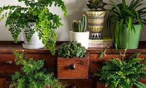 Кімнатні квіти і рослини — каталог з фотографіями і назвою і догляд за ними