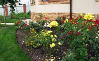 Троянди в ландшафтному дизайні дачної ділянки, ідеї, відео