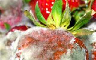 Хвороби полуниці з фото, описом і лікуванням