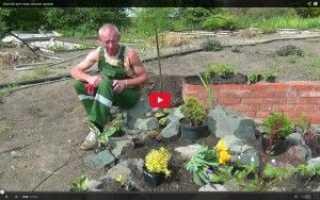 Як зробити рокарій відео рокарій своїми руками, альпійська гірка своїми руками відео