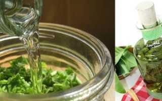 Настоянка із золотого вуса — рецепти приготування і використання, відео