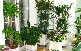 Рослини для спальні — які можна і не можна тримати в спальні, відео
