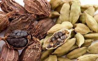 Кардамон рослина. Опис, властивості, вирощування і застосування кардамону