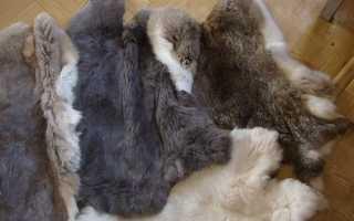 Вироблення шкур кролика в домашніх умовах, технологія, відео