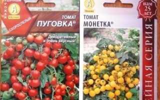 Вирощування томатів на підвіконні взимку Посадка і догляд за помідорами