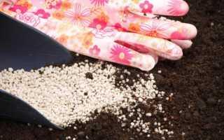 Морква Каротель: опис сорту, як садити і для яких регіонів