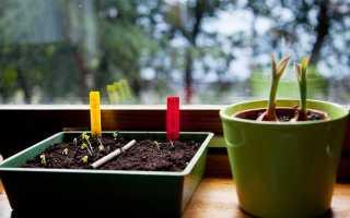 6 помилок квітникаря, або Чому не сходять насіння? фото