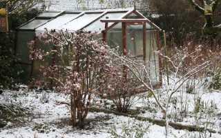 Ранньовесняна захист саду від шкідників і хвороб