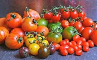 Сорти помідор для відкритого грунту — відео