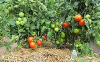 Мульчування помідорів у відкритому грунті, матеріали, відео