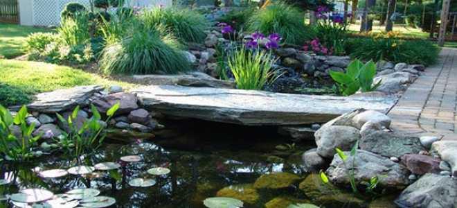 Водоймище на дачній ділянці — цікаві ідеї дизайну великих і маленьких ставків, відео