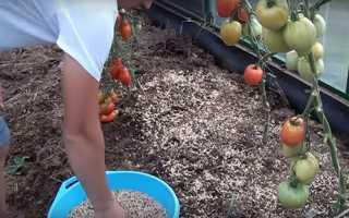 Сидерати в теплиці, підбір суміші трав для посіву, відео