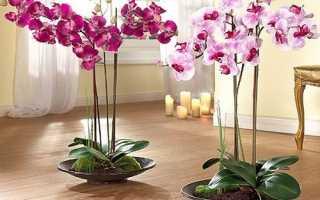 Добриво Боні Форте для орхідей з бурштинової кислотою — відео