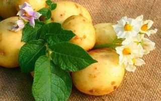 Як садити картоплю? Коли садити картоплю?