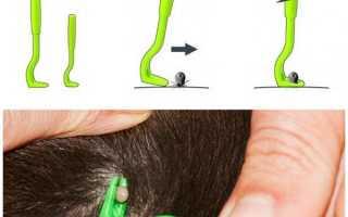 Як витягнути кліща у собаки: способи видалення