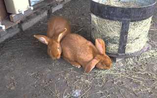 Тваринництво — зміст кроликів в ямах і клітинах, переваги і недоліки, відео