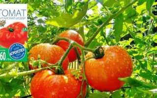 Томати серії «Алтайський» — помідори з фруктовим смаком
