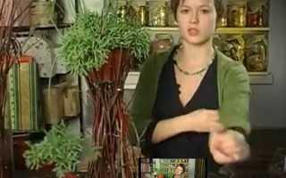 Кашпо з гілок для квітів — майстер-клас виготовлення, відео