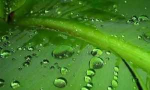 Що таке фотосинтез? Опис, особливості, фази і значення фотосинтезу