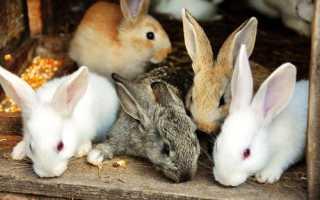 Які бувають кролики, види, популрние породи, відео