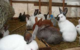 Комбікорм для кроликів — ціна, склад, виготовлення своїми руками, добова норма споживання, відео
