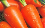 Морква Ред Кор: опис сорту, рекомендації по вирощуванню врожаю