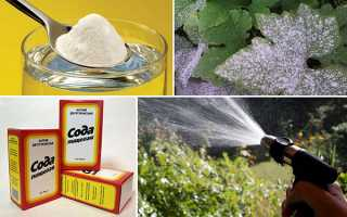 Харчова сода для саду та городу — 22 способу успішного застосування, відео