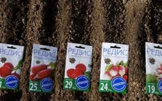 Коли садити редиску: особливості весняного, літнього та подзимнего посівів, відео