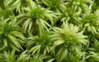 Застосування моху сфагнум в медицині, садівництві, відео